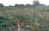 Grundstück abstecken